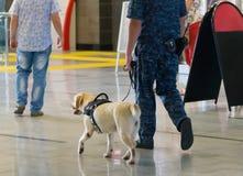 警察和嗅探犬狗在机场 免版税库存照片