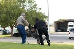 警察K-9示范 免版税库存图片