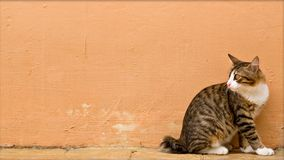 警惕猫的照片 免版税库存图片