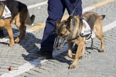 警犬和警察的腿 免版税库存照片