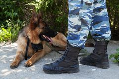 警犬的画象,护羊狗 免版税库存图片