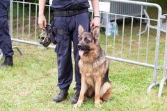 警犬 有当班一只的德国牧羊犬的警察 库存照片