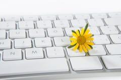 计算机概念花卉生长 库存照片