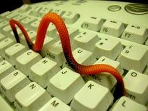 计算机蠕虫 图库摄影