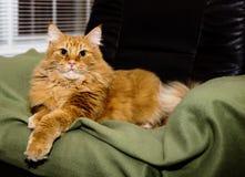 认为她的猫是女王/王后 免版税库存照片