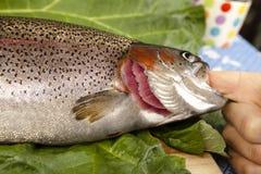 认可新鲜的鳟鱼 库存照片