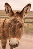 讨人喜欢的驮货驴子 免版税库存图片