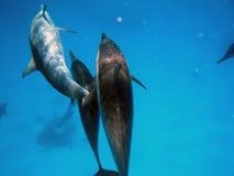 讨厌的海豚 库存图片