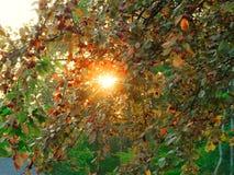 让太阳来通过发光 免版税库存图片
