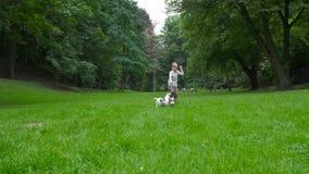 让我们一起演奏概念 白种人白肤金发的儿童男孩步行和奔跑与他的两条狗杰克罗素狗由公园 股票录像
