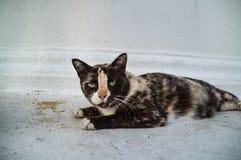 让猫是猫 免版税图库摄影