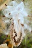 让去种子 免版税图库摄影