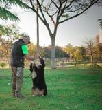 训练伯尔尼的山狗,大型猛犬的驯狗师,在公园 免版税库存照片