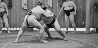 训练在相扑槽枥的相扑摔跤手 免版税库存照片