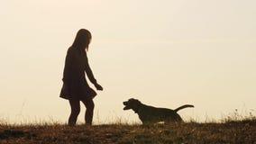 训练狗和喂养它在自然的可爱的女孩剪影 股票录像