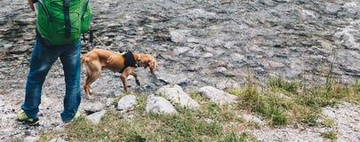 训练狗在搜寻和抢救人的河 免版税图库摄影