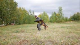 训练的德国牧羊犬狗咬伤保护衣服的人 免版税库存图片