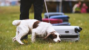 训练警犬 免版税图库摄影