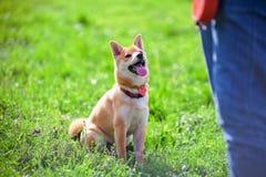 训练与狗 库存照片