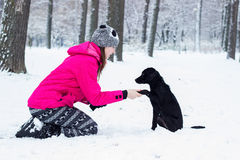 训练她的狗,冬天的女孩 免版税库存照片