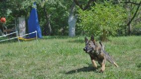 训练狗的一个年轻人 免版税库存图片