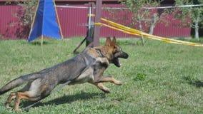 训练狗的一个年轻人 图库摄影