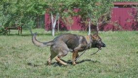 训练狗的一个年轻人 免版税图库摄影