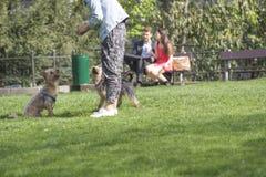 训练狗 库存照片