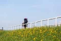 训练风景的赛马 免版税库存照片
