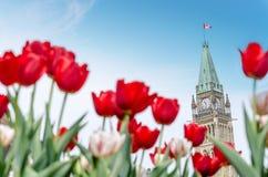 议会大厦和平塔在渥太华 免版税库存图片