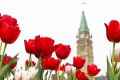 议会大厦和平塔在渥太华 免版税库存照片
