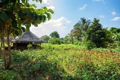 议院在村庄在斯里兰卡 免版税库存照片