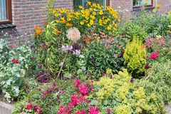 议院有有几棵开花的植物的前院 库存照片