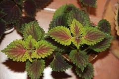 议院植物 免版税库存照片
