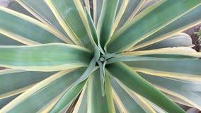 议院植物 免版税库存图片