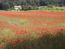议院用法语与领域的普罗旺斯地区有很多红色开花的鸦片 免版税库存图片