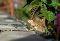 议院蜥蜴或小的壁虎在植物下 库存图片