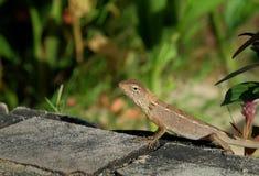 议院蜥蜴或小的壁虎在植物下 免版税库存照片