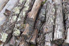 记录木头 库存图片