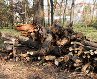 记录木头 免版税库存照片