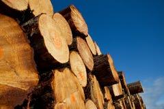记录的日志堆木材 免版税图库摄影