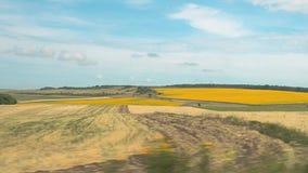记录的自然全景风景,当驾驶汽车时 黄色和绿色农业领域在夏天 蓝天 股票视频