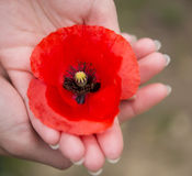 记忆天红色鸦片在手上 免版税库存图片