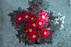 记忆天/星期天的红色花 库存图片