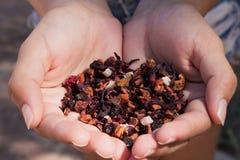 登记茶 免版税库存图片