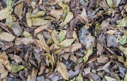 许多一起干燥叶子堆 免版税图库摄影
