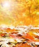 许多下落的秋叶的一个五颜六色的图象 免版税库存照片
