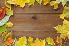 许多不同的下落的秋叶框架  库存图片