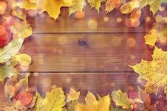 许多不同的下落的秋叶框架  免版税库存图片