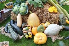 许多不同的健康菜在草的庭院里 免版税库存照片